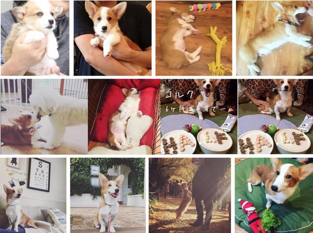 社員犬コルクの幼少期から現在に至るまでのかわいい写真