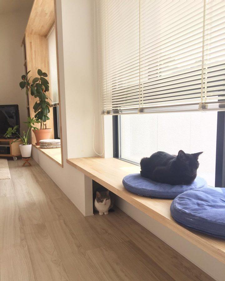 ベンチの上にいる猫と下にいる猫