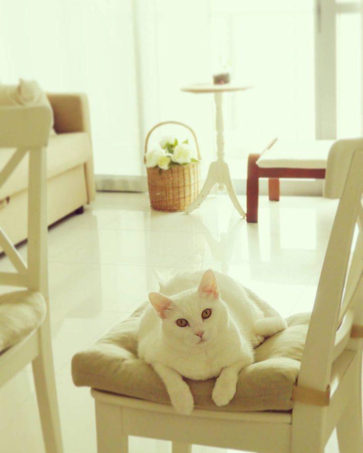 椅子の上の白猫