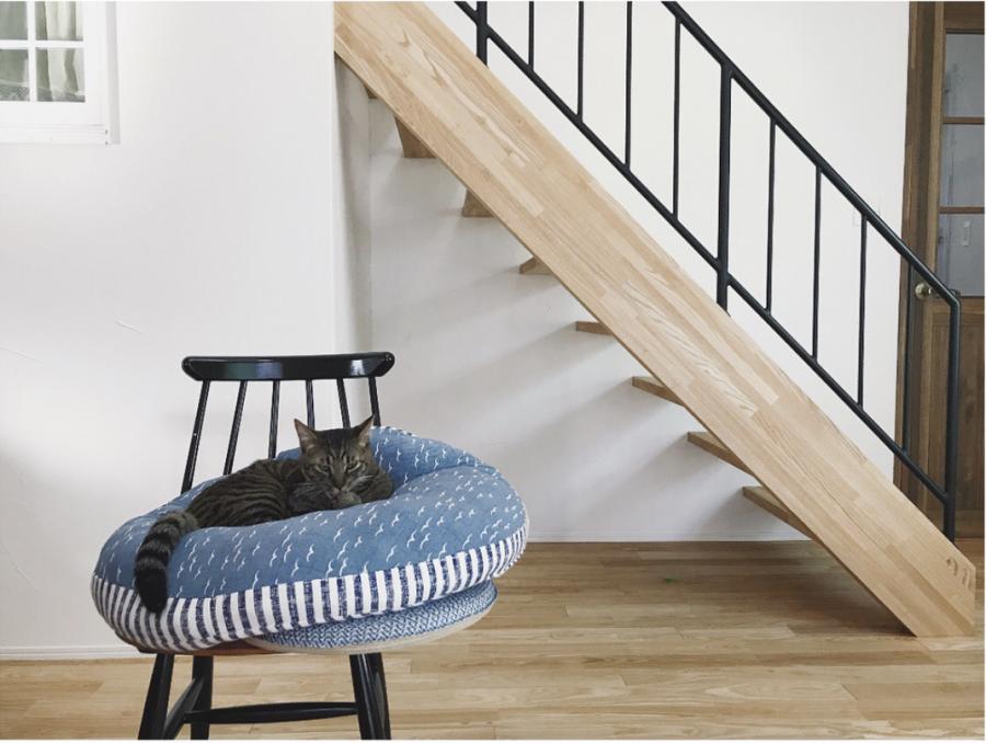椅子の上のネコ