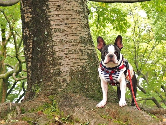 登山をする犬