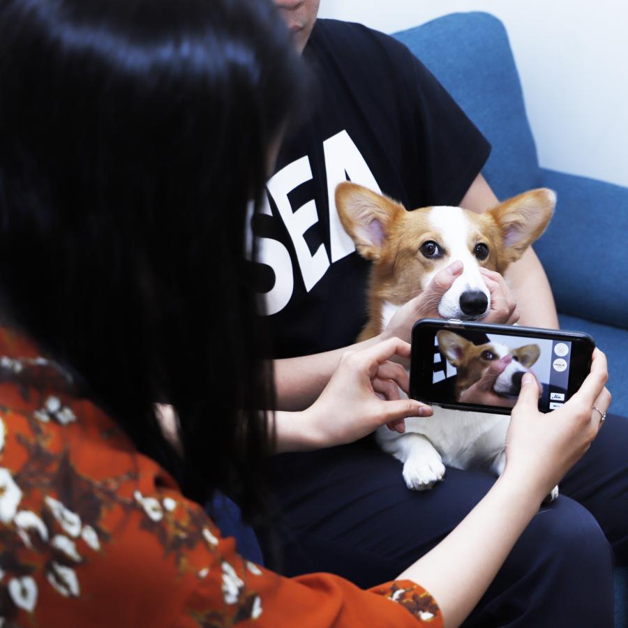 犬の鼻紋の撮り方
