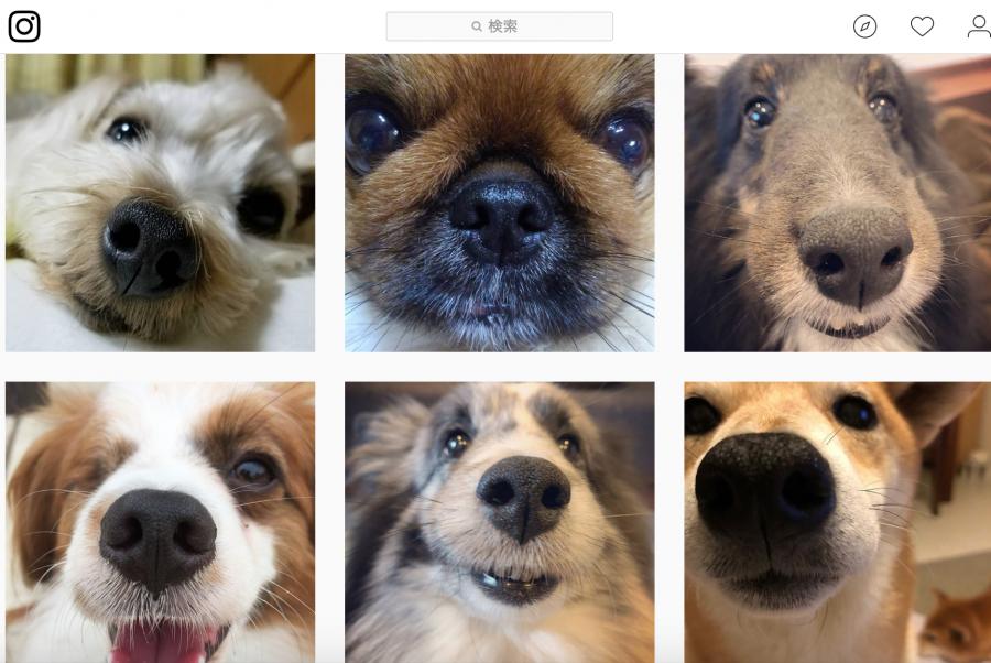 犬の鼻紋フォトコンテスト