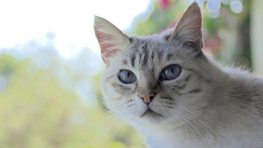 世界猫の日」を知っていますか?...