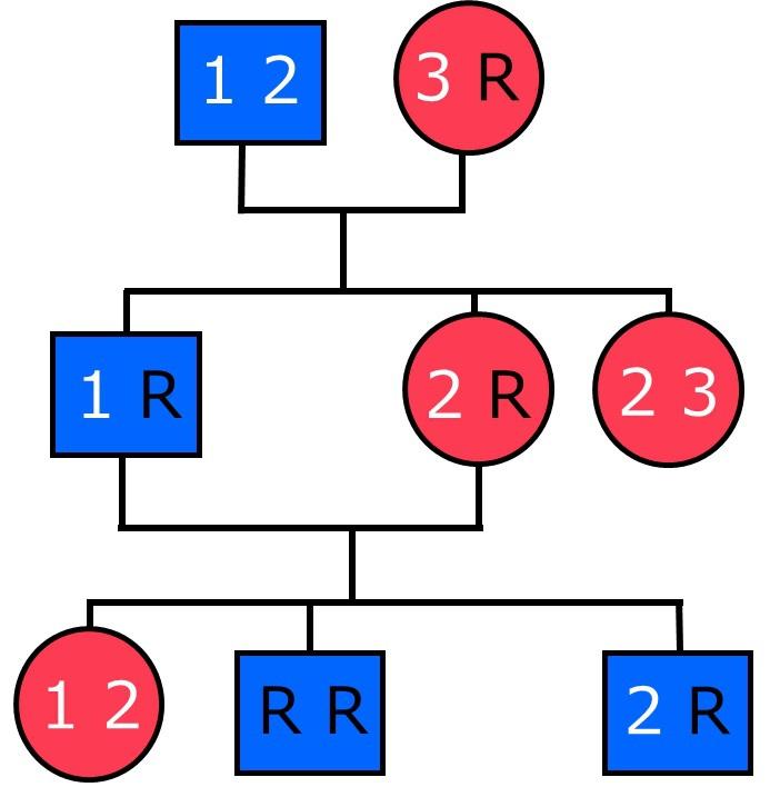 遺伝子 疾患 交配 近親