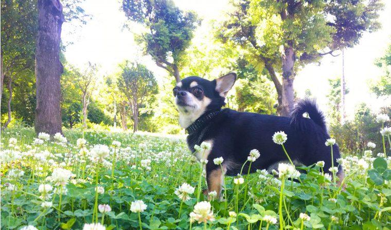 スマホカメラも構図を意識して愛犬をいつもよりかわいく犬の