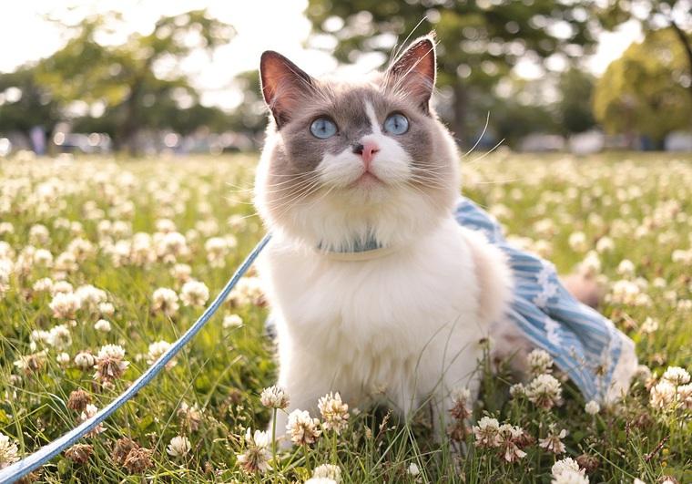 猫 電車 ストレス