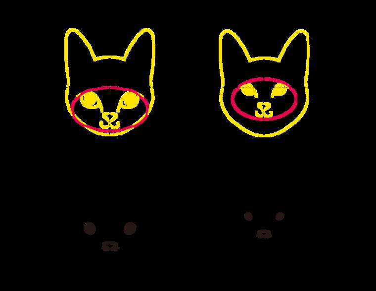 猫の描き方をプロが解説 骨格を意識したデッサン手法から 顔の特徴を出すコツまで ペトコト