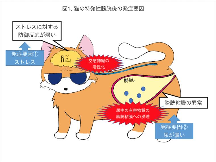 猫 膀胱 炎 症状
