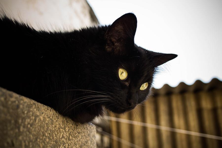 黒猫の画像 p1_19