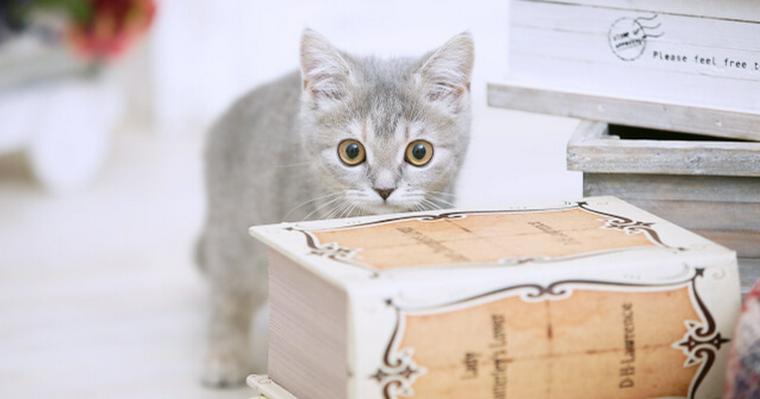 猫がティッシュを食べるのはなぜ?悪戯を防止する …