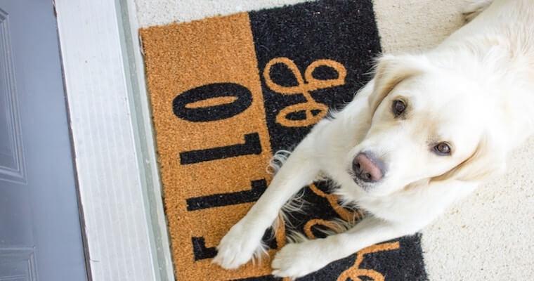 犬のメラノーマ(悪性黒色腫)とは? 口腔内を中心に症状などを獣医師が解説