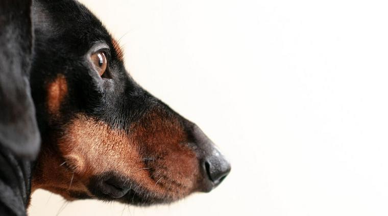 犬のメラノーマとは