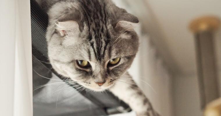 ぶら下がる猫
