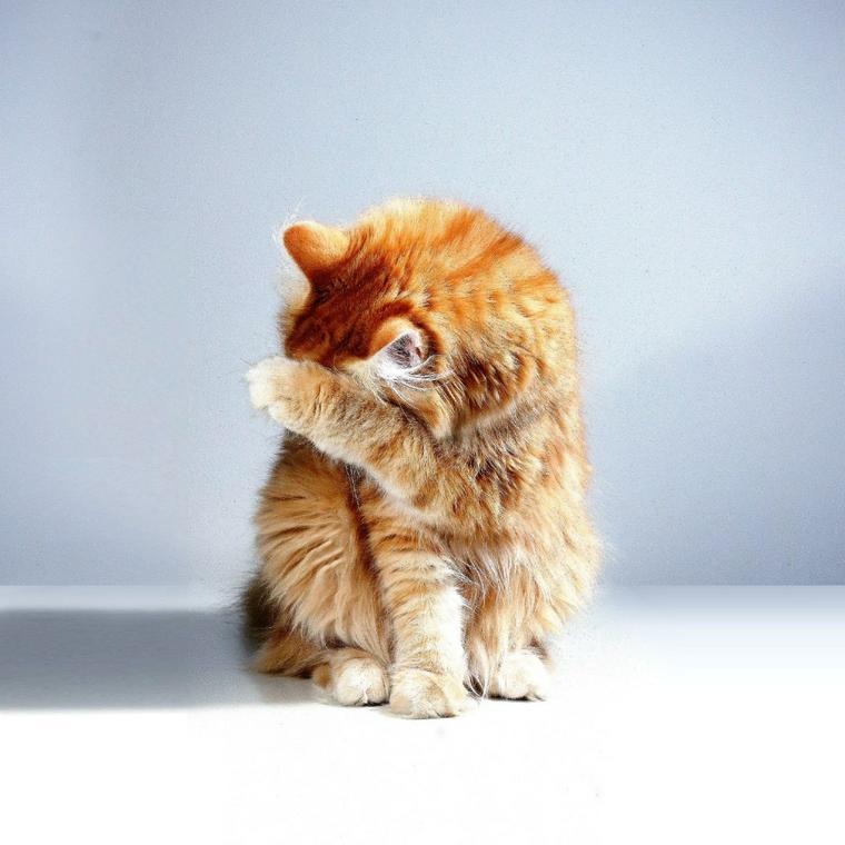 くしゃみ 多い 猫