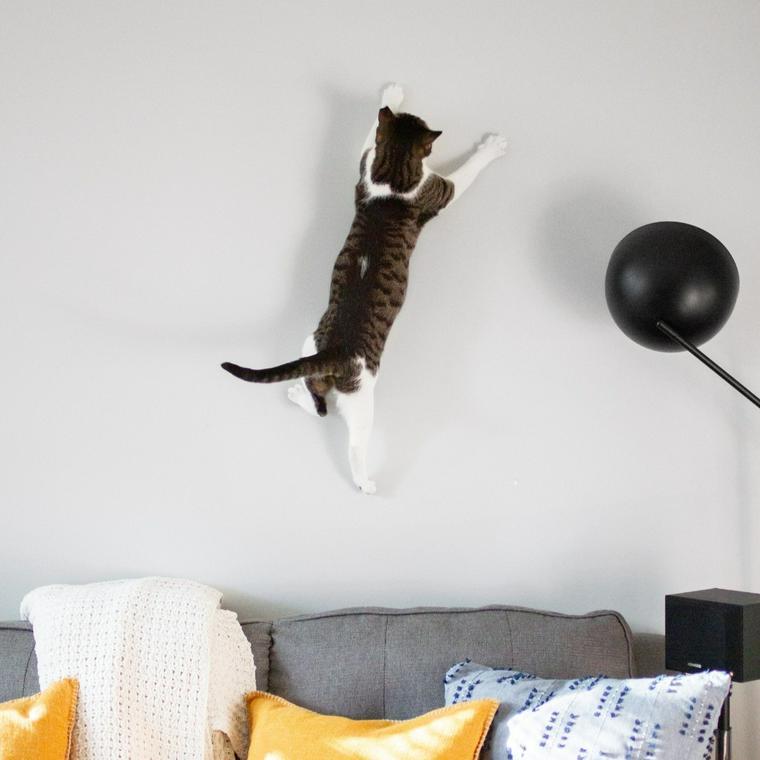 猫 走り回る 理由