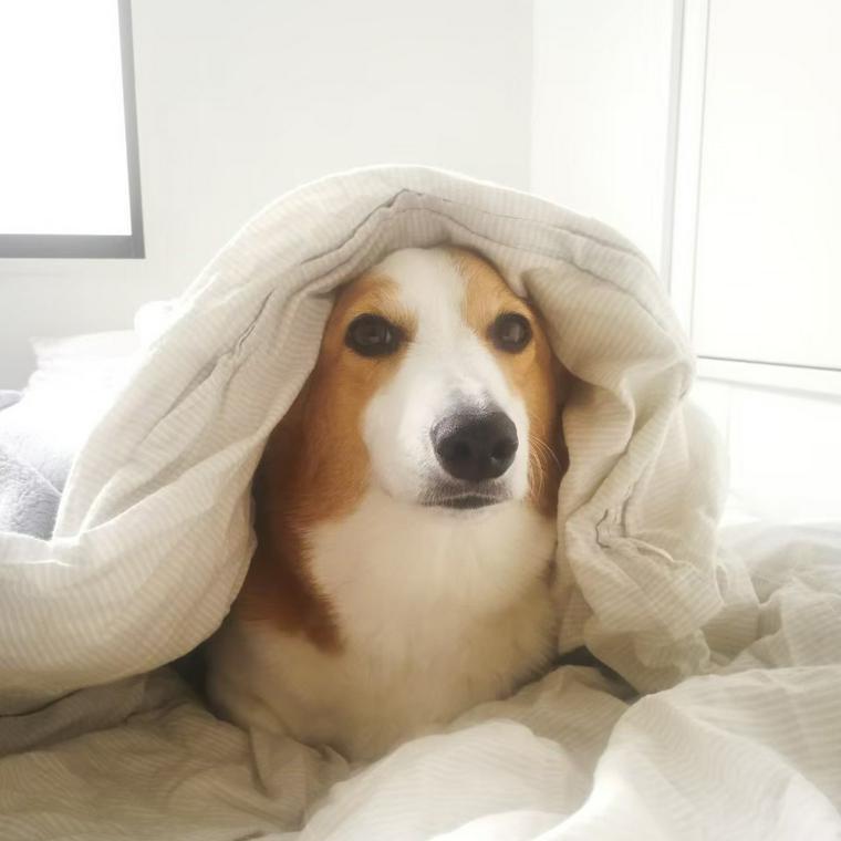 が 歌 犬 寝る
