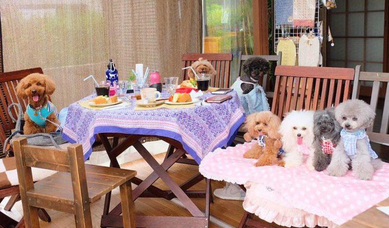 広島のドッグカフェ&レストラン...