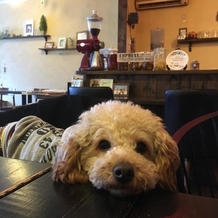 犬 カフェ 札幌