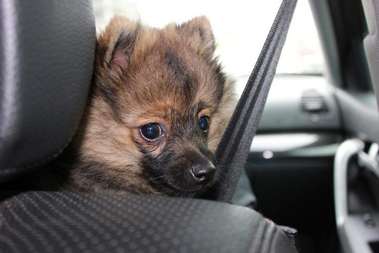 犬が車酔いをする理由は人と同じ 対策と慣れさせるため方法を解説
